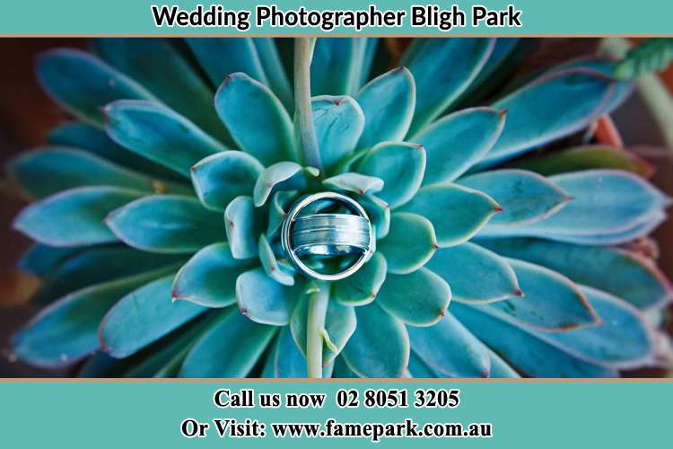 Photo of the wedding ring design at the top of the plant Bligh Park NSW 2756