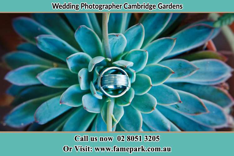 Photo of the wedding ring design at the top of the plant Cambridge Gardens NSW 2747